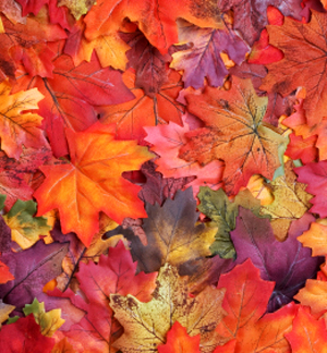Magical Autumn Fragrance Oil