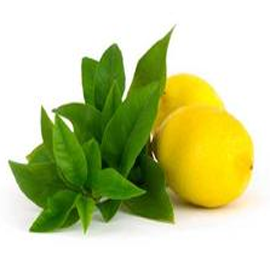Lemon Verbena Elegance Candles