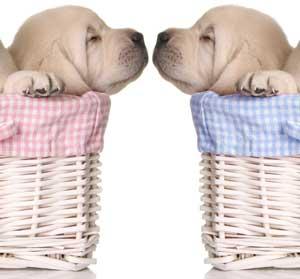 Snuggles Wax Tarts