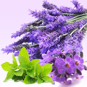 Lavender Mint Magik Beanz