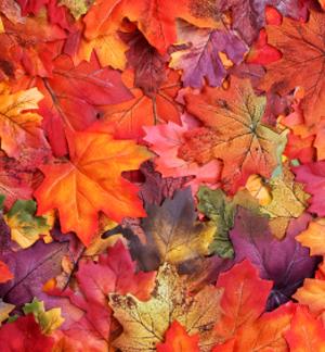 Magical Autumn Elegance Candles