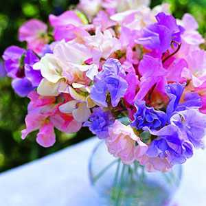 Sweet Pea Arbour Candles