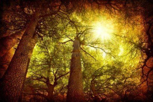 Sweet Cedar Tea Light