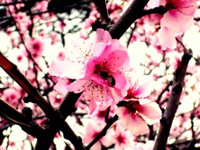 Perfect Blossom Tea Light