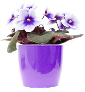 Violet Garden Tea Light