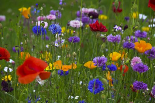 Spring Meadow Tea Light