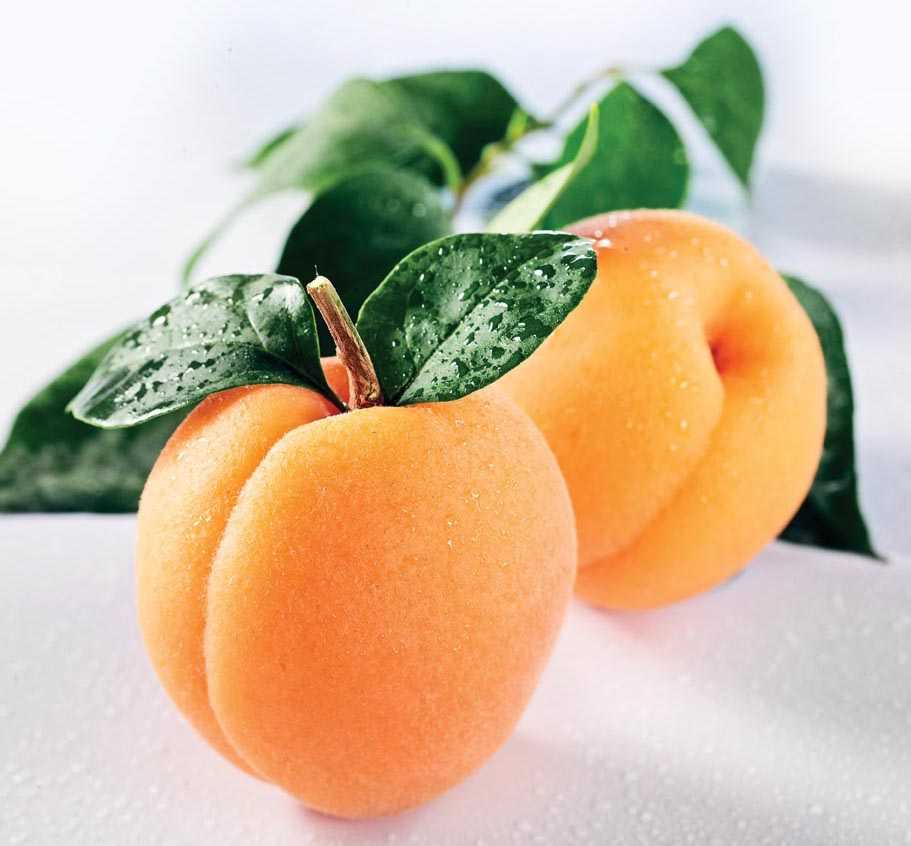 Apricot Lush Elegance Candles