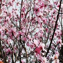 Magnolia Blossom Medium Elegance Candle