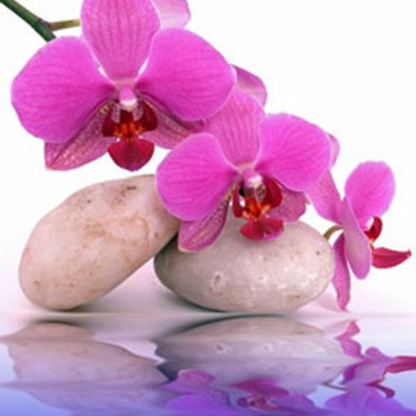 Orchid Dreams Tea Light